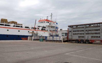 La caída en 2018 de la exportación de animales amenaza con ser un síntoma de crisis de este tráfico en el Puerto
