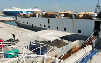 El Puerto exporta por primera vez animales vivos a Arabia Saudí