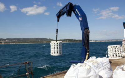 Repsol financia la instalación de nuevos biotopos marinos en la playa de la Pineda